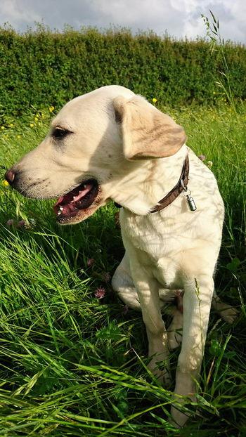 Dogsareawesome Domestic Animals Pets Canine Photography Dogslife Dog Dog Photography Dog Walking Dogs_of_instagram Doglovers Dog❤ Dogs Of EyeEm DogLove Canine Love :) Dog Love