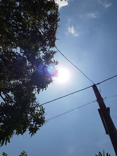 Beauty In Nature Cable Day Electricity  Electricity Pylon Hanging Lens Flare Low Angle View Nature No People Outdoors Power Line  Power Supply Sky Sun Sunbeam Sunlight Tree