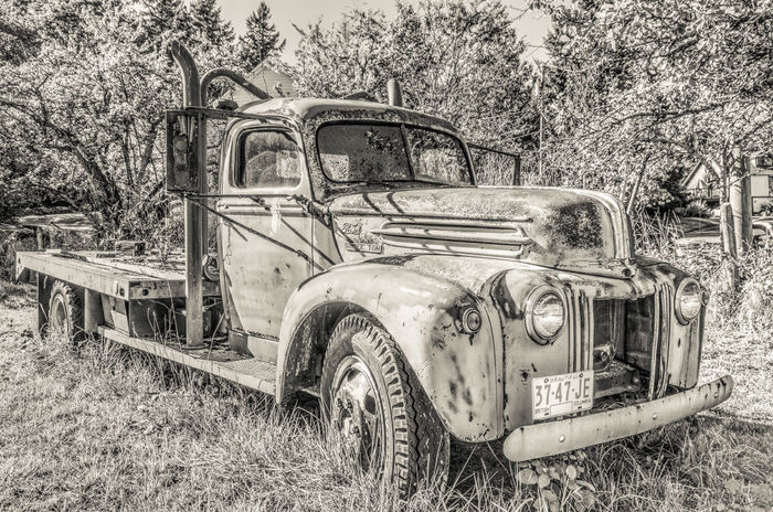 Old Truck in the Field Abandoned Bad Condition Damaged Decline Deterioration Front View Land Vehicle Mode Of Transport Nostalgia Obsolete Old Old Ruin Old Truck Old-fashioned Retro Styled Run-down Rusty Stationary The Past Transportation Tree Vintage Vintage Car Weathered