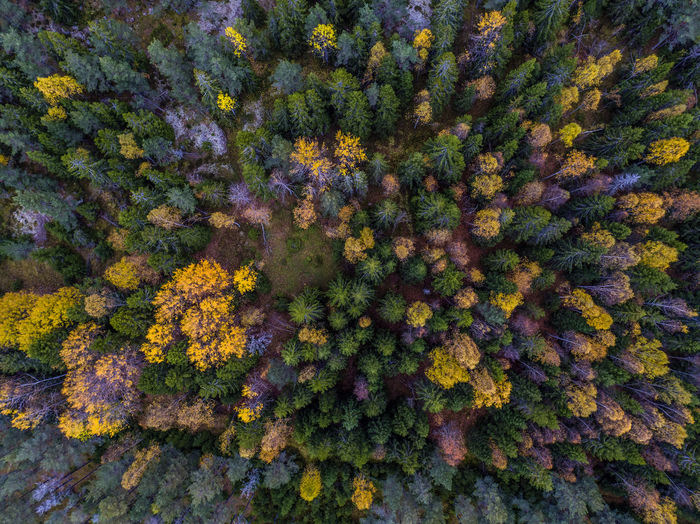 The Opening Autumn Autumn Colors Beauty In Nature Day Drone  Dronephotography Fall Fall Beauty Fall Colors Freshness Full Frame Multi Colored Nature No People Outdoors Trees