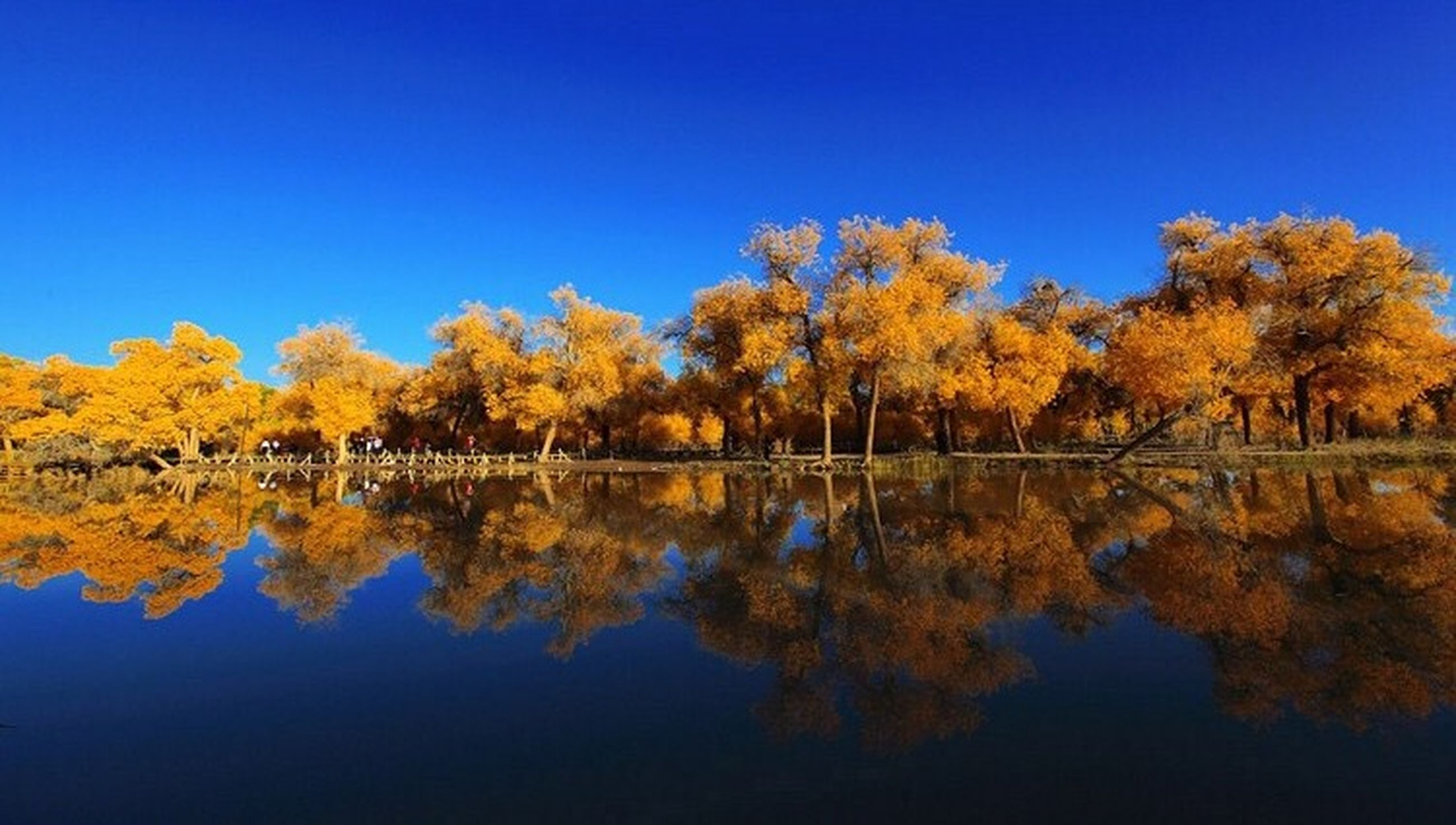 clear sky, tree, blue, reflection, autumn, water, tranquility, tranquil scene, beauty in nature, scenics, lake, copy space, change, nature, season, yellow, waterfront, idyllic, standing water, growth