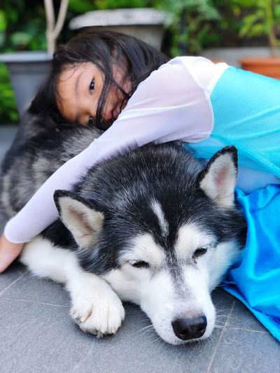 Sleeping with the beast Siberian Husky Beauty And The Beast Girl Pets Dog Domestic Animals Animal Themes Sleeping Mammal One Animal