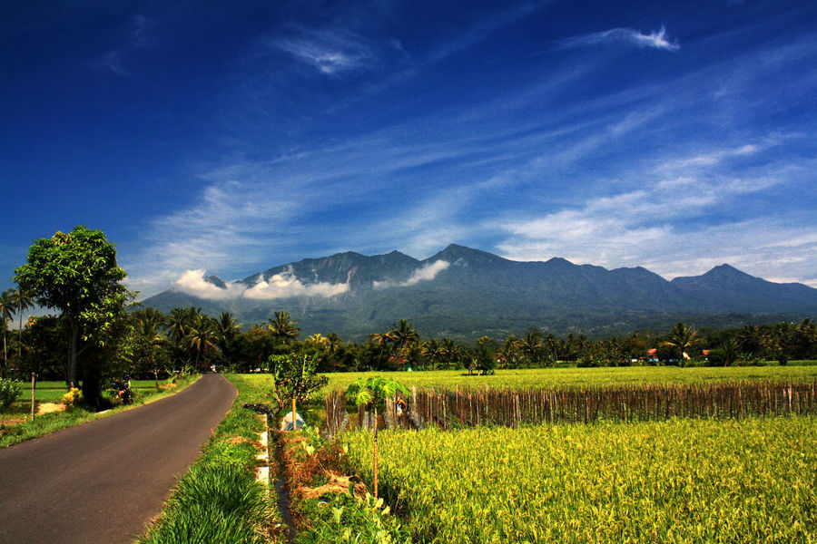 the beauty of Mount Galunggung as seen from Sukaratu Agriculture Beauty In Nature Cloud - Sky Day Farm Field Growth Landscape Mountain Mountain Range Nature No People Outdoors Paddyfield Plant Rice Paddy Ricefield Road Rural Scene Scenics Sky Tasikmalaya Tranquil Scene Tranquility Tree