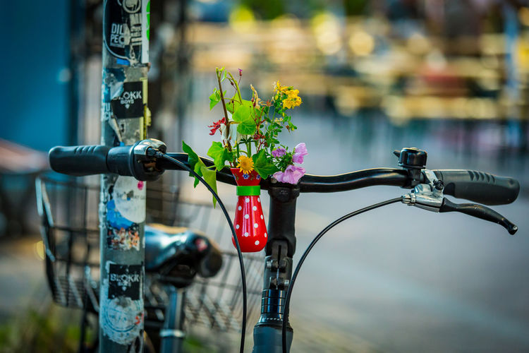 Close-up of flowering plant by bicycle