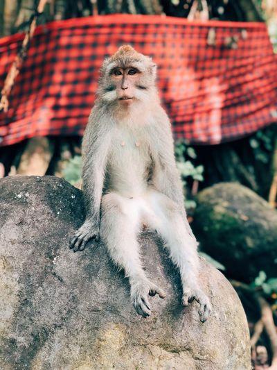 Portrait of monkey sitting on rock