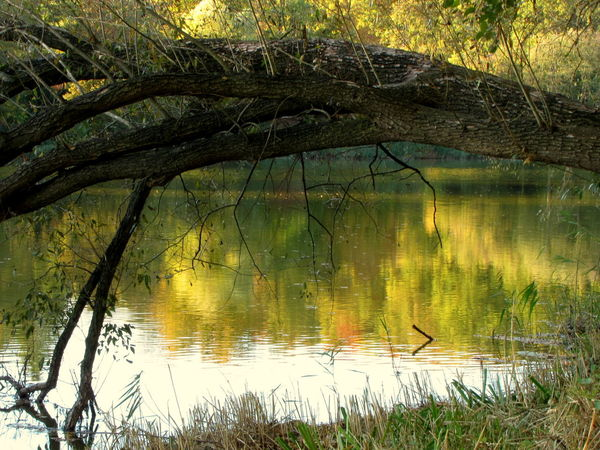 Beauty In Nature Branch Day Forest Grass Growth Lake Nature No People Non-urban Scene Outdoors Plant Reflection Scenics - Nature Tranquil Scene Tranquility Tree Trunk Water