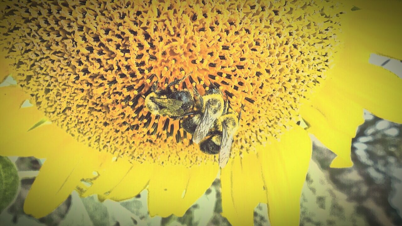 animal themes, insect, animals in the wild, bee, yellow, animal wildlife, one animal, honey bee, flower, nature, no people, petal, fragility, beauty in nature, day, outdoors, honeycomb, beehive, buzzing, close-up, pollination, flower head, apiculture, freshness, teamwork