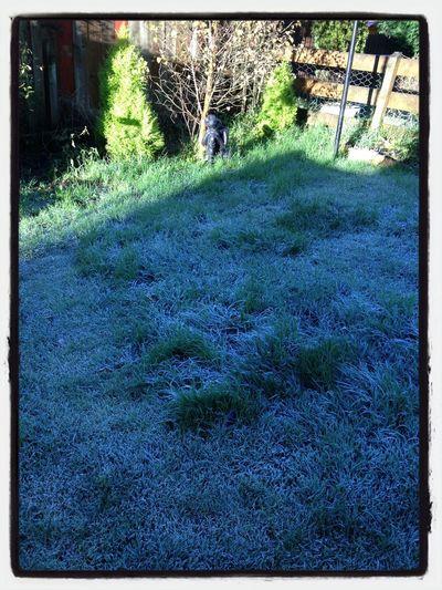 beautiful frosty morning