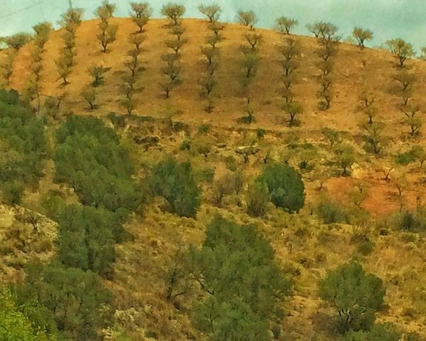 Road To Málaga Colours Of Dryness Andalucía Nature Olive Tree And Shadowlands Love Spain Campo Colours Malaga Spain