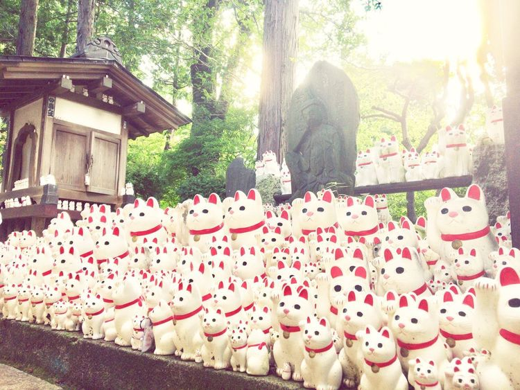 歴代の飼い猫供養で来ました。 Day Animal Themes Cat Cats Lucky Cat Lucky Cats White Color Buddha Statue Stone Statue Japanese Culture