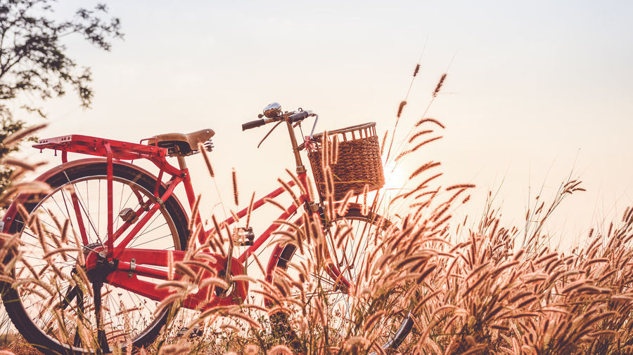 Bicycle amidst plants growing on land against sky during sunset