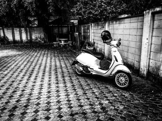 Land Vehicle Transportation Mode Of Transport Outdoors Motorcycle One Person Real People Day Built Structure Architecture Building Exterior Men Tree Scooter One Man Only Sitting Adult Adults Only People Only Men New Vespa New Vespa Thailand