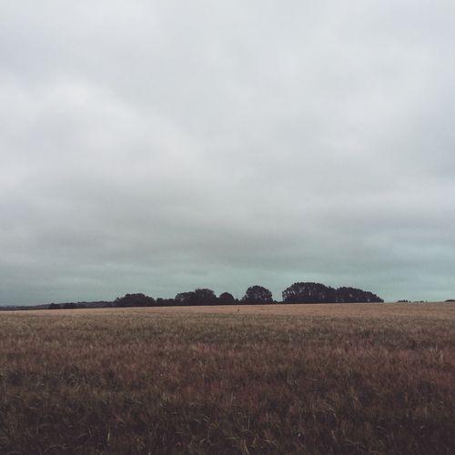 Thegreatoutdoors2015EyeemAwards Field Happy Clouds Cloudy Outside Woods Walking Procrastinating