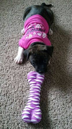 Pink Color Pets One Animal Domestic Animals Purple Dog Animal Themes High Angle View Mammal Relaxation Sleeping No People Indoors  Pet Clothing Day Puppy