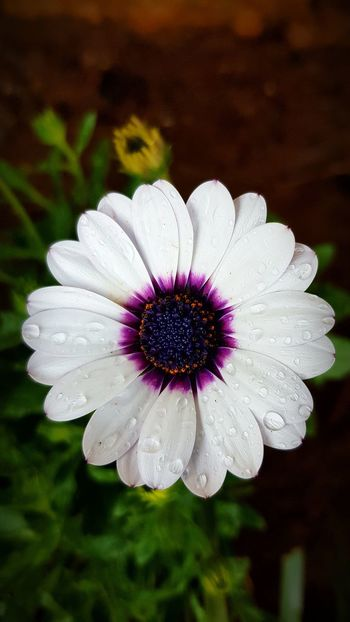 Flower Flower Head Fragility Petal Pollen Nature Purple Beauty In Nature Freshness Close-up Outdoors No People