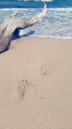 Beach Sand Sea Shore Nature Water Tranquility Wave Tranquil Scene Hawaii Kauai Beauty In Nature Day Outdoors Footprints Serene Serene Outdoors Driftwood Low Tide