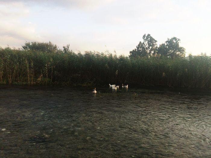 Akyaka Water Scenics Azmak Nature