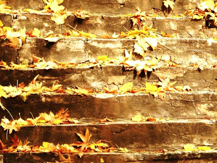 First Eyeem Photo Minimalism In The Forest Stairs It's Follow Friday! The Week Of Eyeem Wekkend Showcase: November