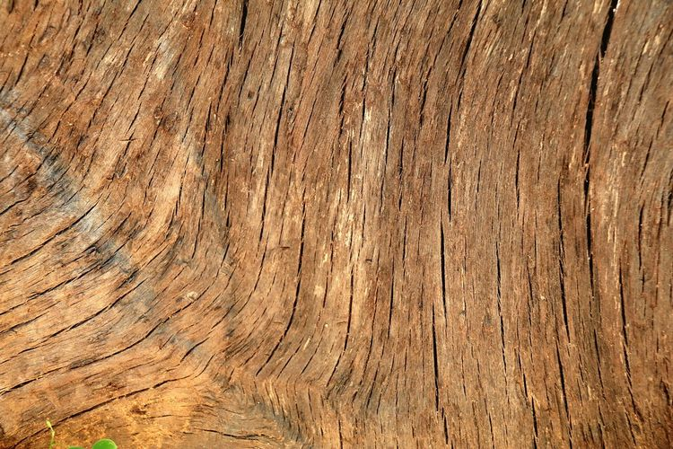 Backgrounds Pattern Textured  Wood - Material Wood Grain Nature Wood Paneling Textures And Surfaces Texture And Surfaces Textures In Nature Texturestyles Texture_collection Texture In Nature Textures And Colors Wood Grain No People Rough Textured  Textured  Timber Textured Effect