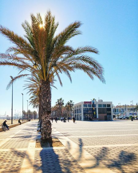 Sunny Valencia SPAIN Sunshine Travel Destinations Europe València Palm Tree Promenade Tree Palm Tree Beach City Clear Sky Sand Shadow Sky Tourism Tourist Attraction  Coast Shore Stories From The City Adventures In The City