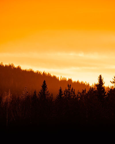 Silhouette trees in forest against sky during sunset