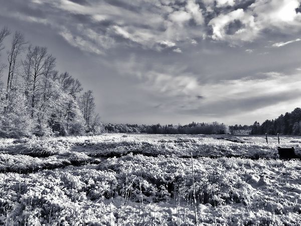 Silver Dust NJ Pinebarrens Snow ❄ EyeEm Nature Lover Tadaa Community Monochrome Beauty In Nature Nature Field Sky Growth Tranquility Tranquil Scene Rural Scene Scenics Agriculture Landscape No People Outdoors Cloud - Sky Day Tree Plant Bare Tree Freshness
