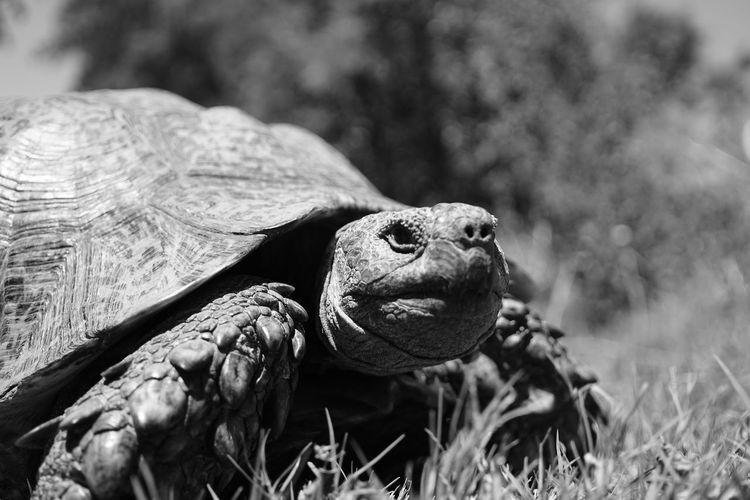 Tortoise 05 No