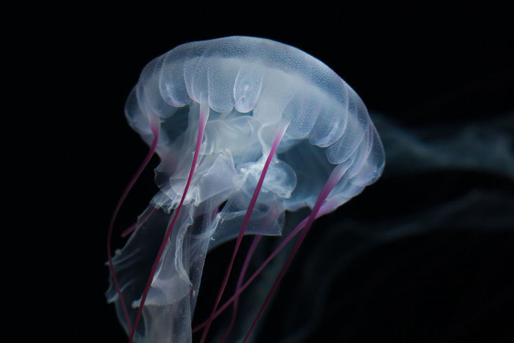 Close-Up Of Jellyfish Underwater
