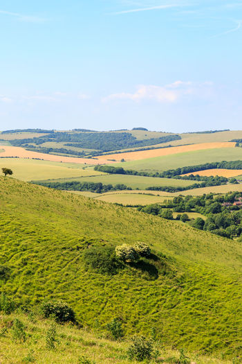 South Downs Landscape Beauty In Nature Day Field Grass Green Color Landscape National Park Nature No People Outdoors Scenics Sky South Downs Sussex Tranquil Scene Tranquility Tree