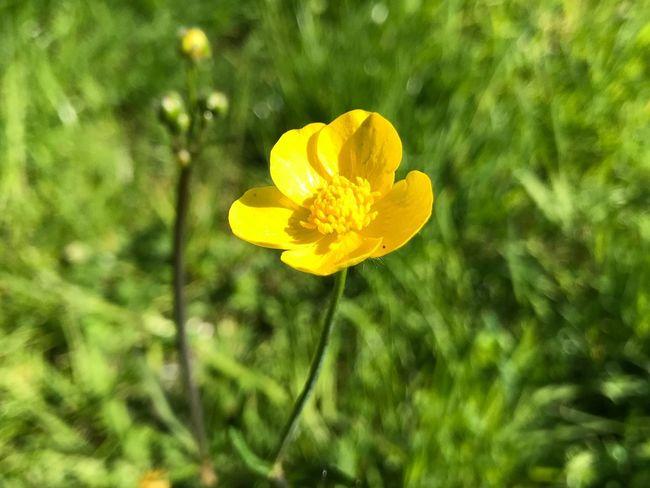 Flowering Plant Flower Plant Fragility Freshness Vulnerability  Yellow
