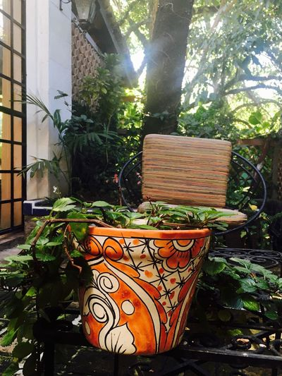 A place in the shade Branch Day Idyllic No People Outdoors Tranquil Scene Tranquility Nature Plant Plant Pot Plant Pot Outside The House. Chair Courtyard  Courtyard House Shade Mexico Tree Day Dreaming Vacations Soul Searching.
