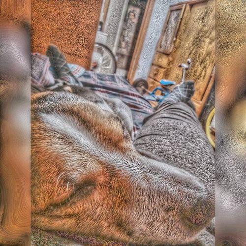 Es domingo y épsilon lo sabe. Dog Epsilon Dormido Ilovemydog