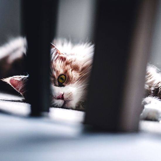 EyeEm Selects Pets Domestic Domestic Cat Domestic Animals Cat Animal Themes Feline Animal Indoors  One Animal Looking At Camera Close-up Home Interior