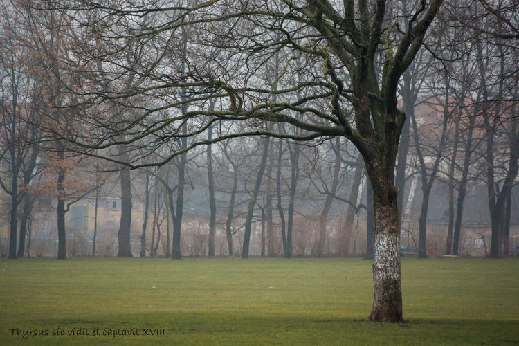Alaunplatz Dresden Trees Winter Alaunpark Germany Mist Park