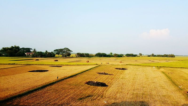 Ricefield along nlex (north luzon expressway) First Eyeem Photo Farmlife Farmers Ricefield Ricefield View Luzon Philippines Nlex Farm Rice Planting Nature Photography Nature Phone Photography