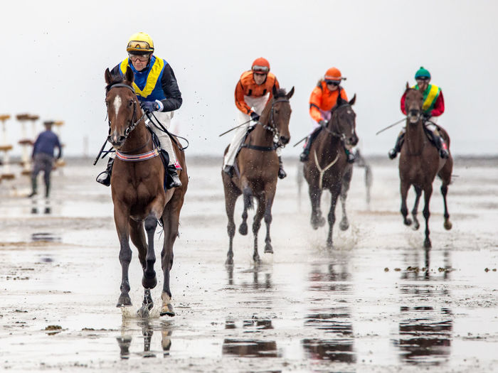 Animal Themes Beach Fun Galope Race Horse Horse Riding Horseraceing Sports Photography