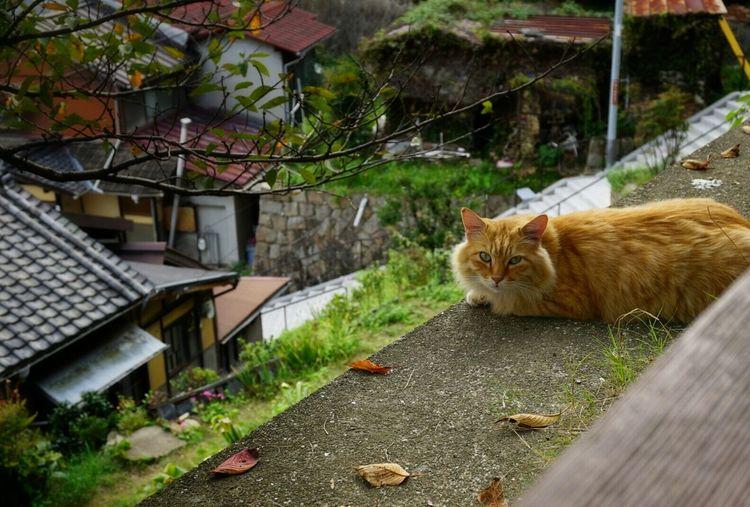 Cat On Footpath