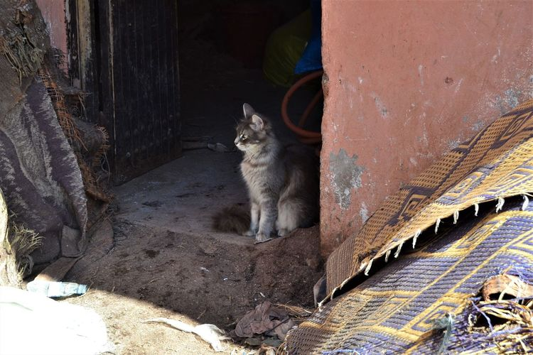 Cat sits by the doorway of the tanneries of Marrakesh, Morocco watching and waiting for something to chase. Domestic Pets Mammal Domestic Animals Domestic Cat Cat Feline One Animal Vertebrate Portrait Looking At Camera Sitting Architecture Day No People Whisker Tanneries Morocco