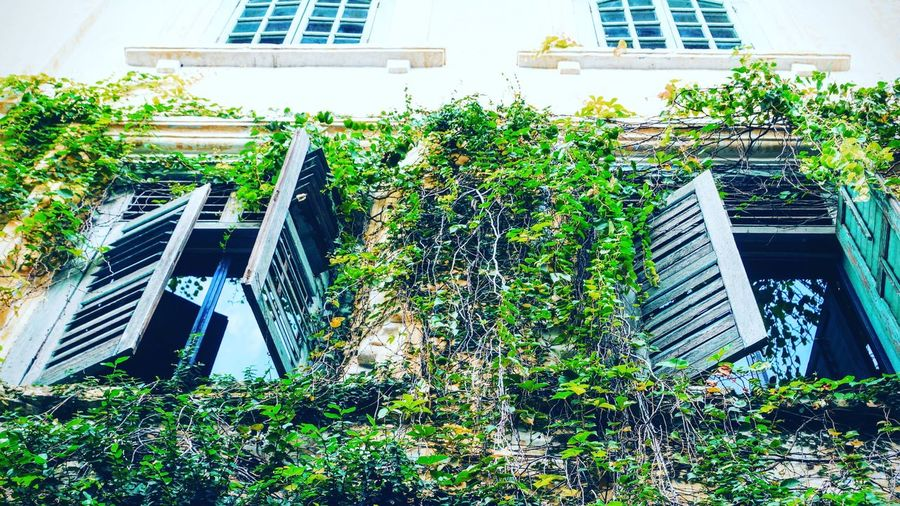 Architecture Building Exterior Built Structure Tree Plant House Growth City Green Outdoors Sunny Day Office Building Green Color Modern City Life Sky Overgrown Office Block No People Ipoh Perak Malaysia Malaysia Truly Asia Tourism Adapted To The City