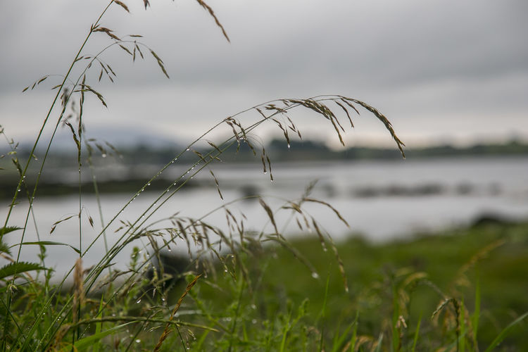 Beauty In Nature Close-up Day Focus On Foreground Grass Growth Nature No People Outdoors Scenics Tranquility Water Perspectives On Nature