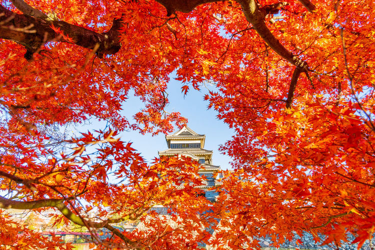 Low angle view of trees by building during autumn