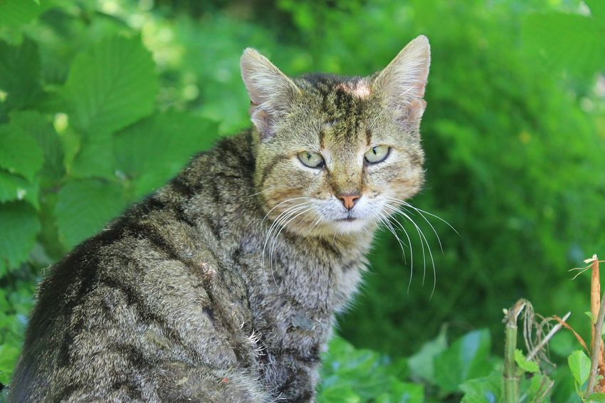 Taking Photos Animals Animal_collection Cat Nature Nature_collection EyeEm Best Shots Eyes Countryside Green