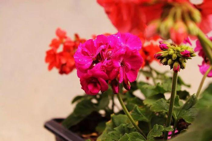 Amoflores Florzinha Flowers S2