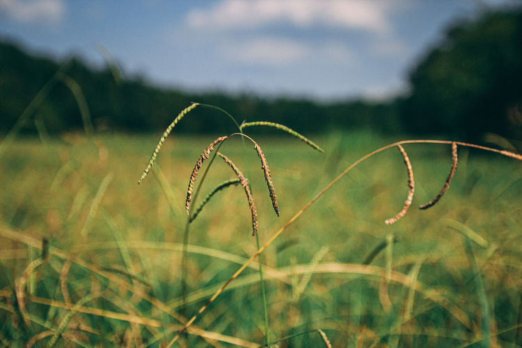 Tall grass in a field out in the countryside.