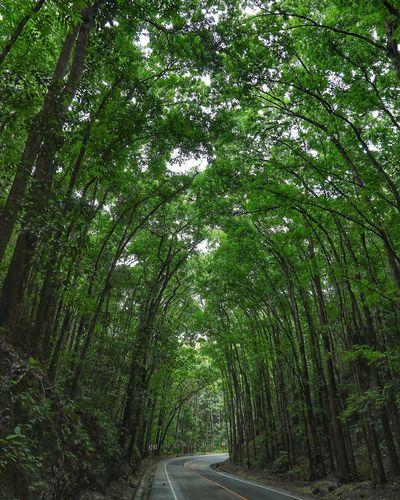 인공숲이 이렇게 멋질수가 있나 - 맨메이드포레스트 . . #하루한컷 #맨메이드포레스트 #필리핀 #보홀 #숲 #나무 #5DMARK4 #신계륵 #EF2470F28LIIUSM Tree Grass Green Color