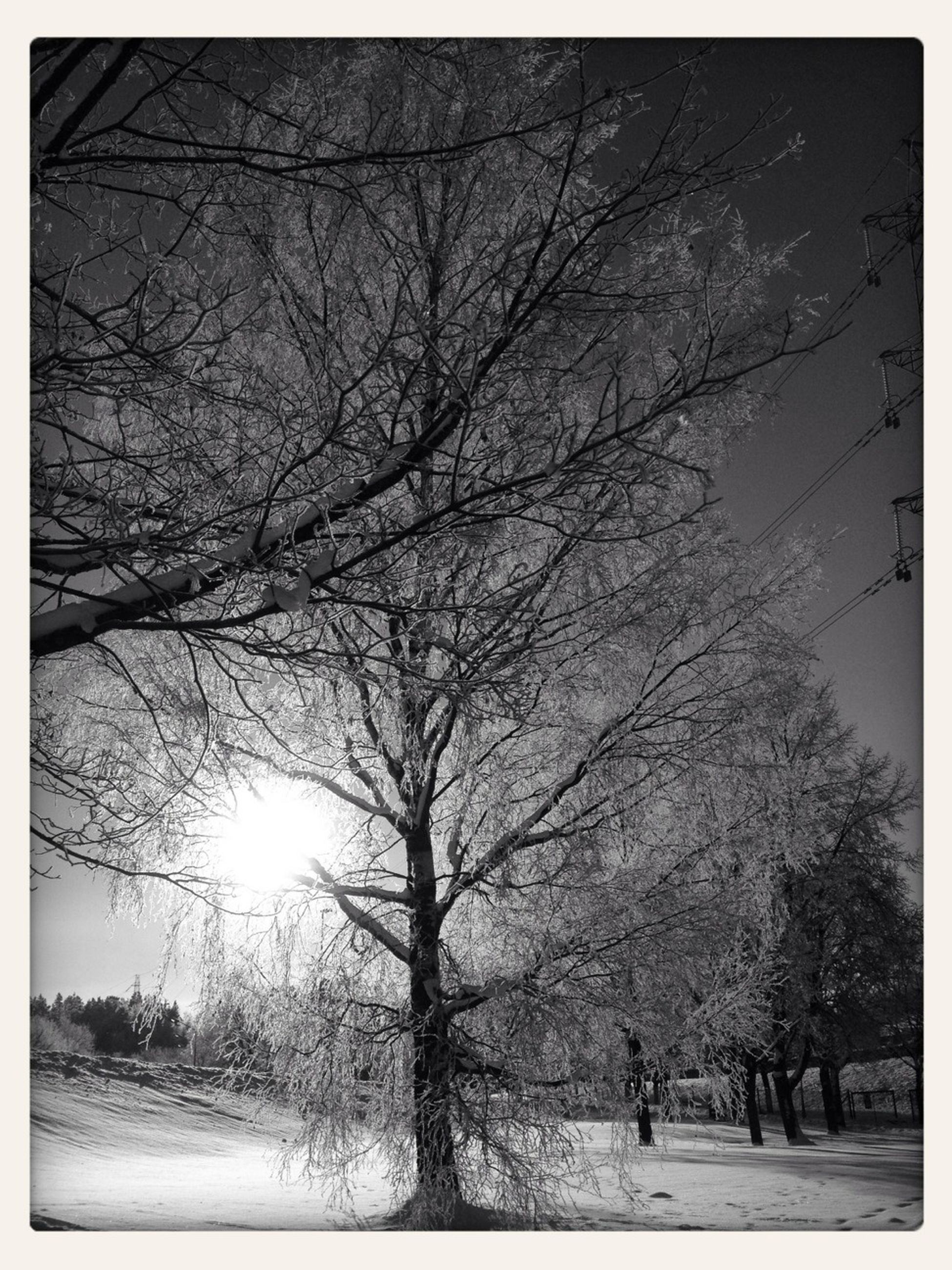 tree, transfer print, branch, bare tree, tranquility, auto post production filter, nature, sun, beauty in nature, tranquil scene, sunlight, scenics, low angle view, growth, sunbeam, landscape, sky, day, tree trunk, outdoors
