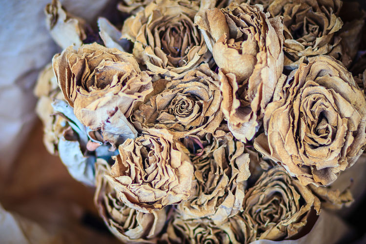 Dried wedding roses flower bouquet background. Close up bouquet of dried withered roses. Dried Rose Flower Rose Petals Dried Dried Rose Dried Roses Dry Flower Flowering Plant Rose - Flower