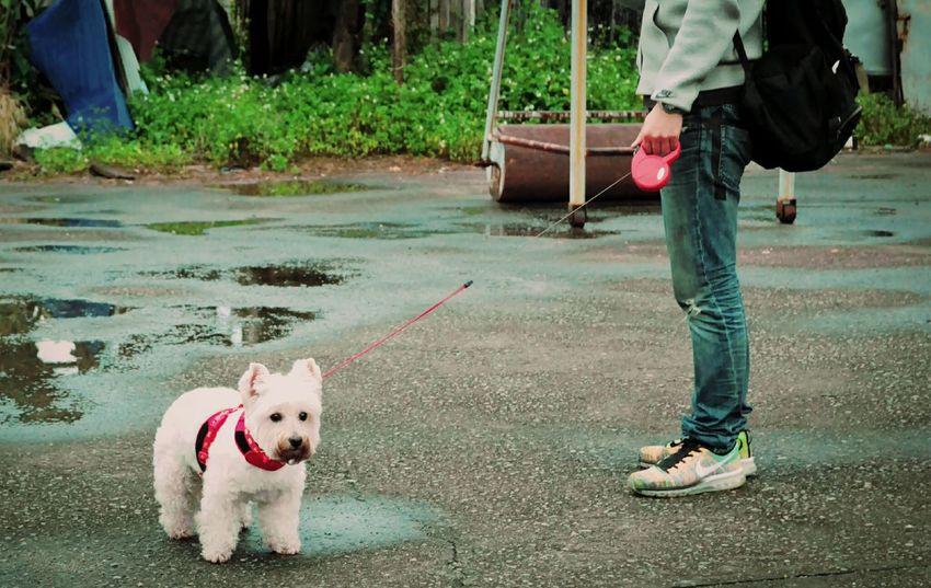 繼薇 Chi-wei Smile Family Time Enjoying Life Play With The Animals Dog Love She Is My Sister Cheese! That's Me 繼薇的表情👉👉👉👉👉(´・_・`)...