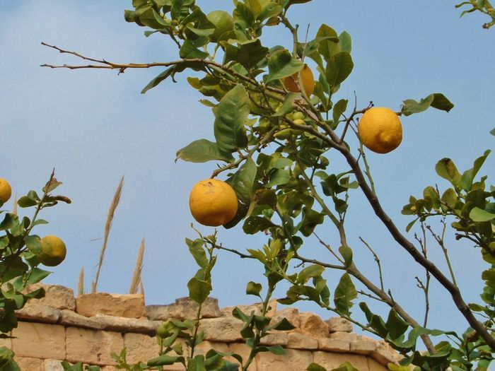 Blue Sky Garden Leaves Lemons Mediterranean  Nature Plants Stone Summer Wall