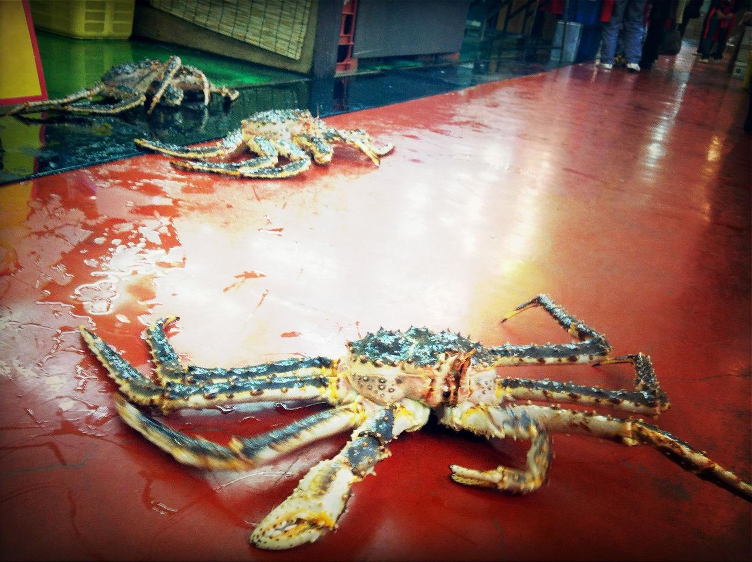 indoors, seafood, animal themes, high angle view, close-up, fish, dead animal, table, still life, food, no people, food and drink, one animal, crab, healthy eating, day, fishing industry, plate, wildlife, wood - material